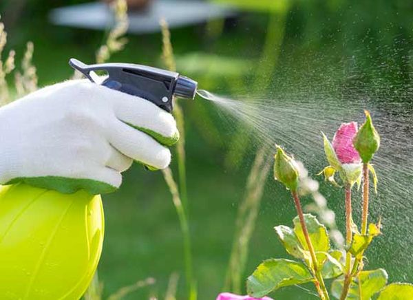 bio-pesticides FOR LAWN