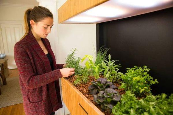 Smart Indoor Garden Grove 1