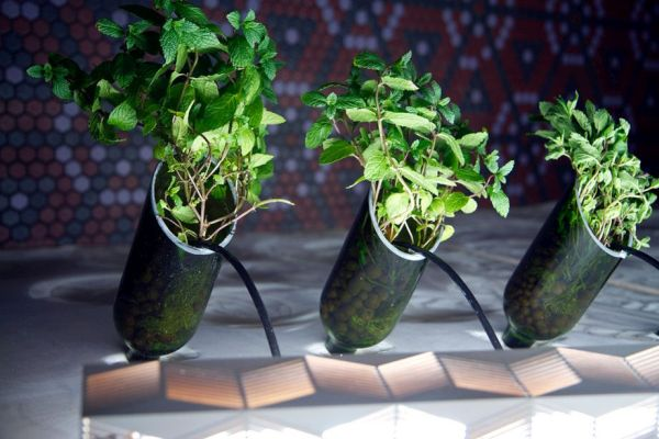 Using recycled wine bottles vertically
