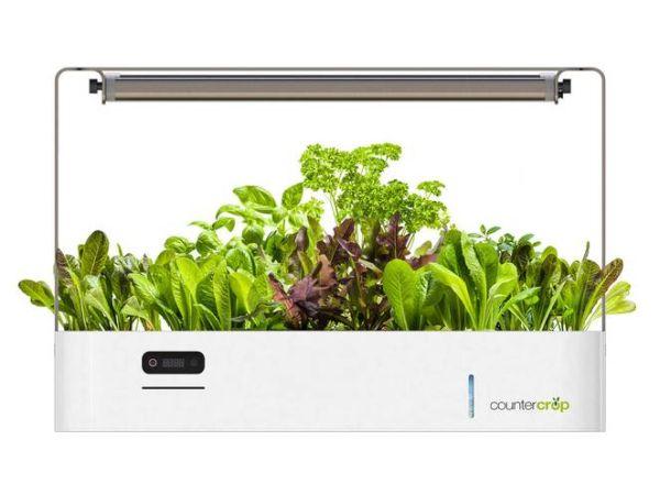 CounterCrop is a smart indoor gardening system