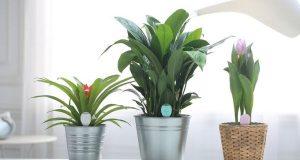 PlantSitter  (2)