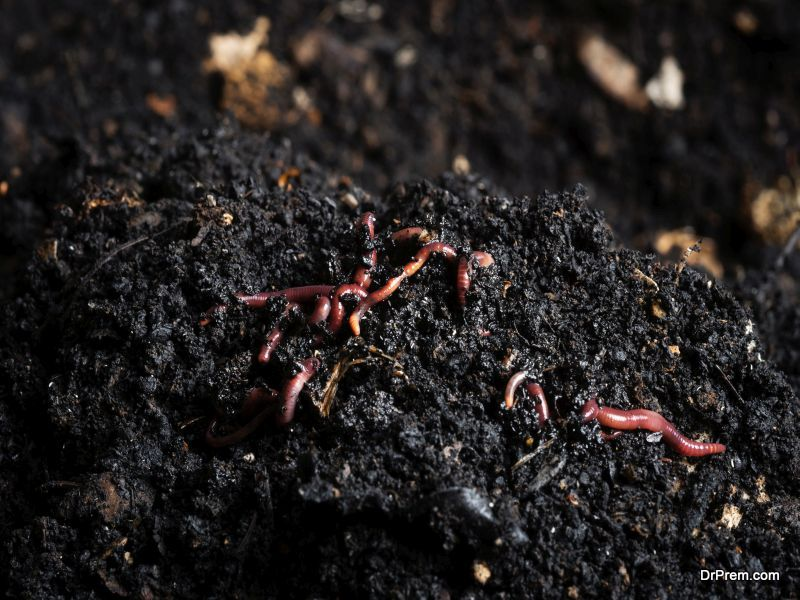 create homemade compost
