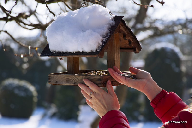 Best food for bird feeders