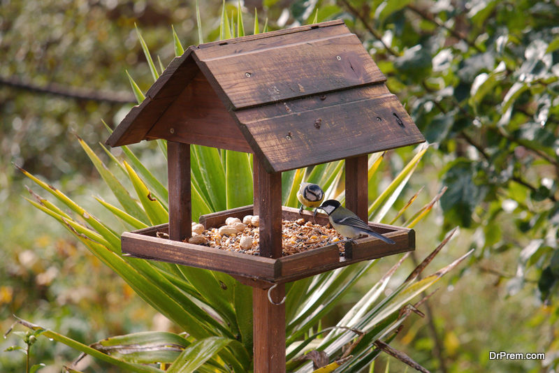 place-your-bird-feeder