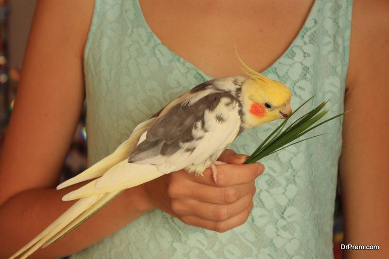 woman feeding the parrot