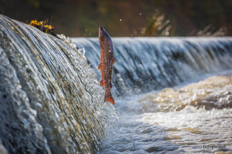 dams-affect-fish-population-