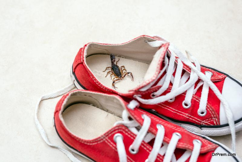 Get Rid of Scorpions