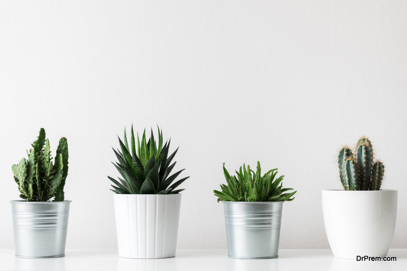 store potted plants in your home